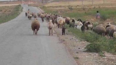 Photo of جريمة بحقّ عدد من رعاة الأغنام في ريف حماة الشرقي